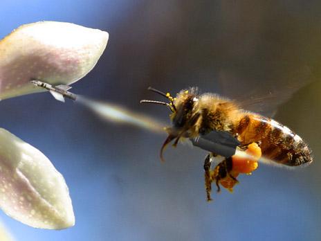 bees with machine guns