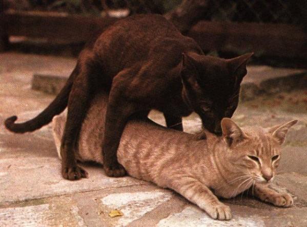 фото секс котов