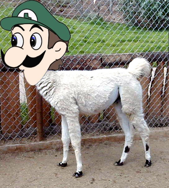 Photoshop Weegee Onto Something
