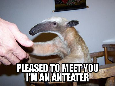 Man Spends 15 Years on Anteaters.