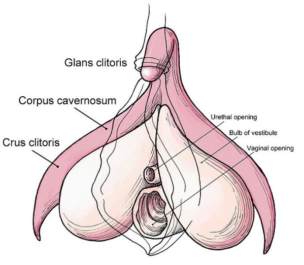 Nsfw Vagina Vagina