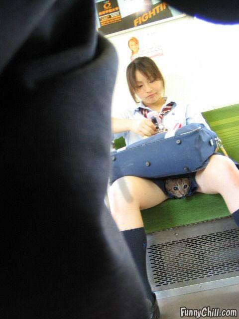 Фото кисок девушек скрытой камерой