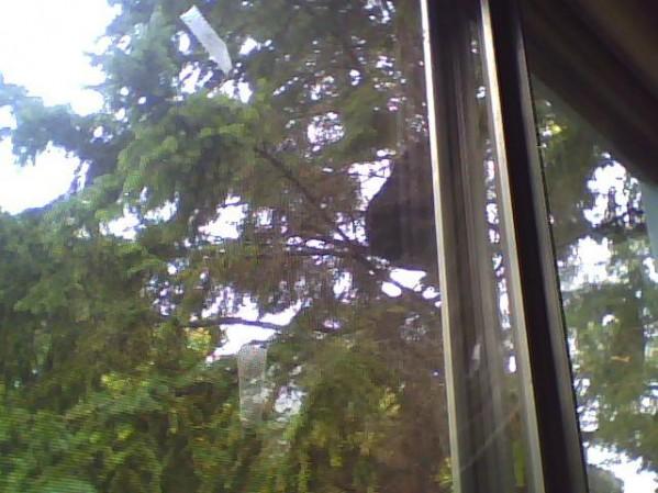 Holy shit! Bear at my window!