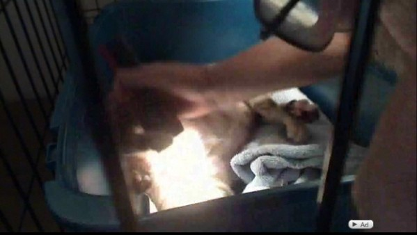 Cat giving birth live stream