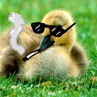 Ey yo who talkin shit about ducks?