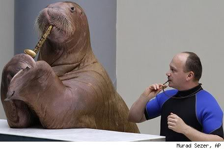 This is now a Walrus Thread.