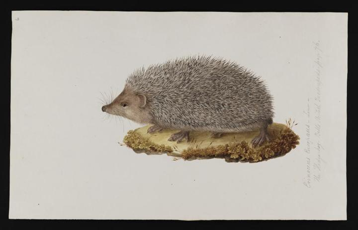 [insert name here] the hedgehog