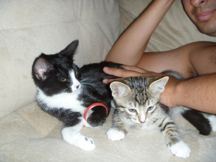 Help Name My Kitten!