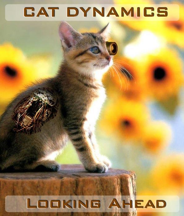 Cat Dynamics