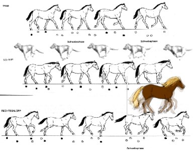 Horse Skeleton Front besides Tiger Vs Dragon 302157486 further How To Draw Animals Birds Their Anatomy And How To Draw Them Vector 21871 also Aztec Warrior Skull Tattoo Design together with How To Draw A Kangaroo. on horse back leg
