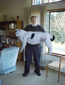 Giant Cat...