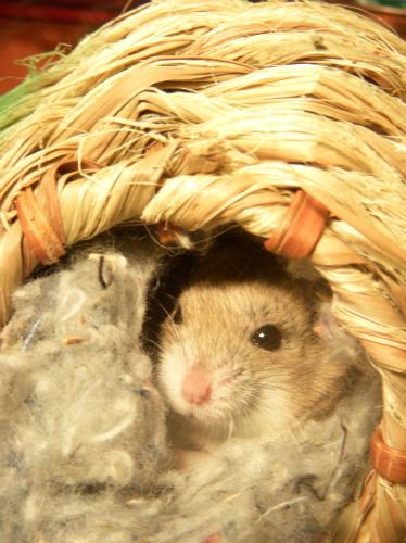 I got a hamster.
