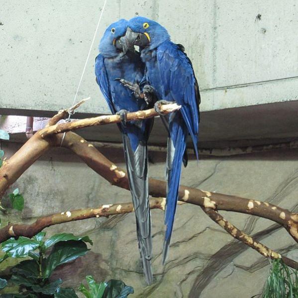 How do birds reproduce?