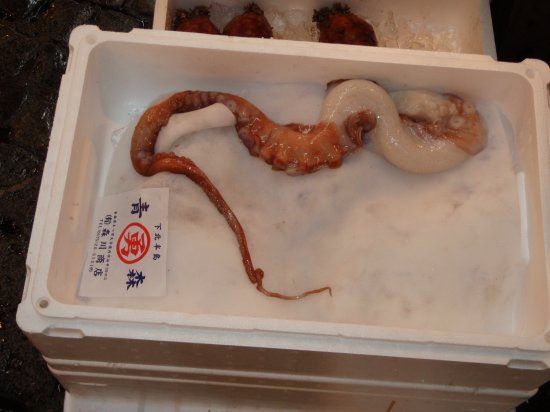 The Squidbit appreciation thread!
