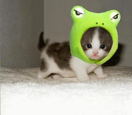 The cutest thing in the universe...