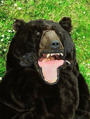 Bears.