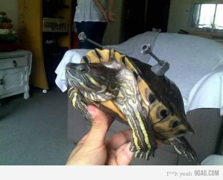 What colour best suits a turtle?