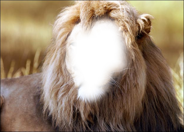 Photoshop Thread... Lion