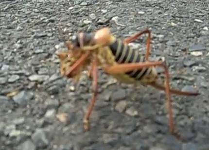 Da fuq is this insect