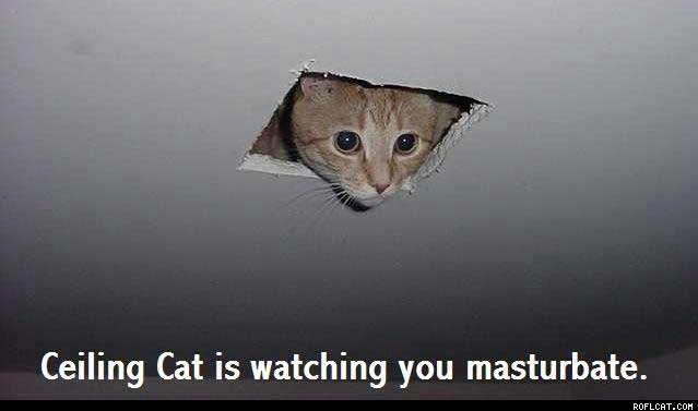 My cat watches me fap...