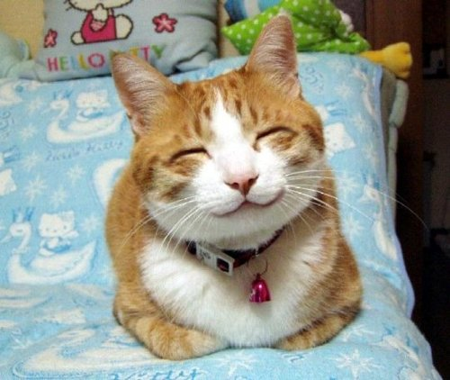 Cats don't smile