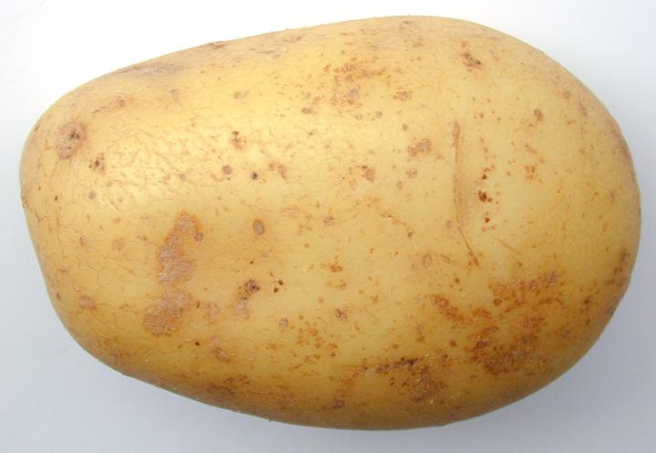 happy birthday potatoman!