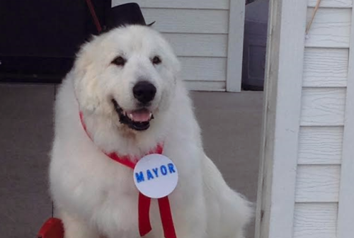 First Dog to hold political office