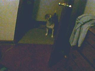 Omg I think my dog's leg is broken!