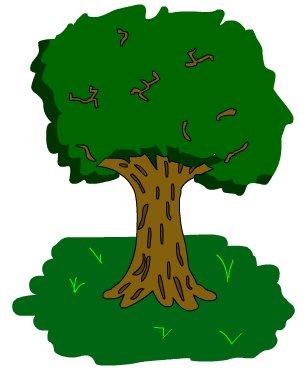 Draw your best tree...
