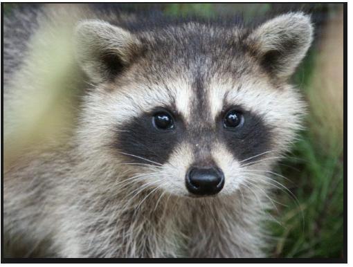 Need Help W/ Shine In Eyes & Fur